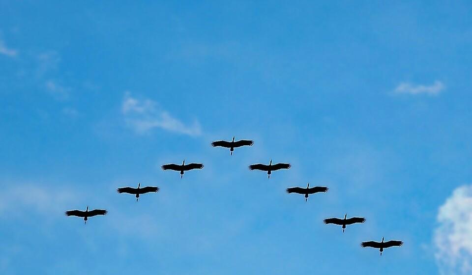 Gueri, observacao de aves - Pixabay