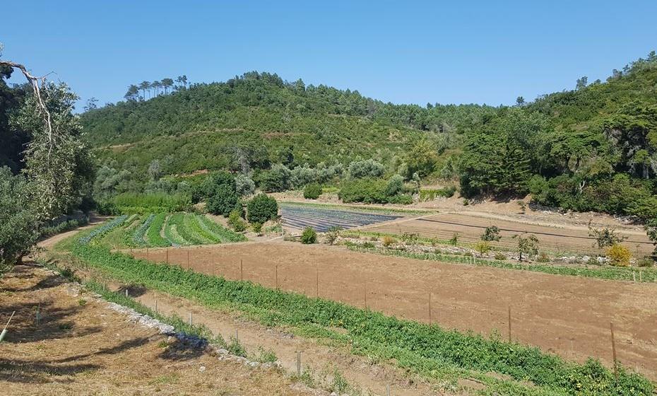 Horta biológica