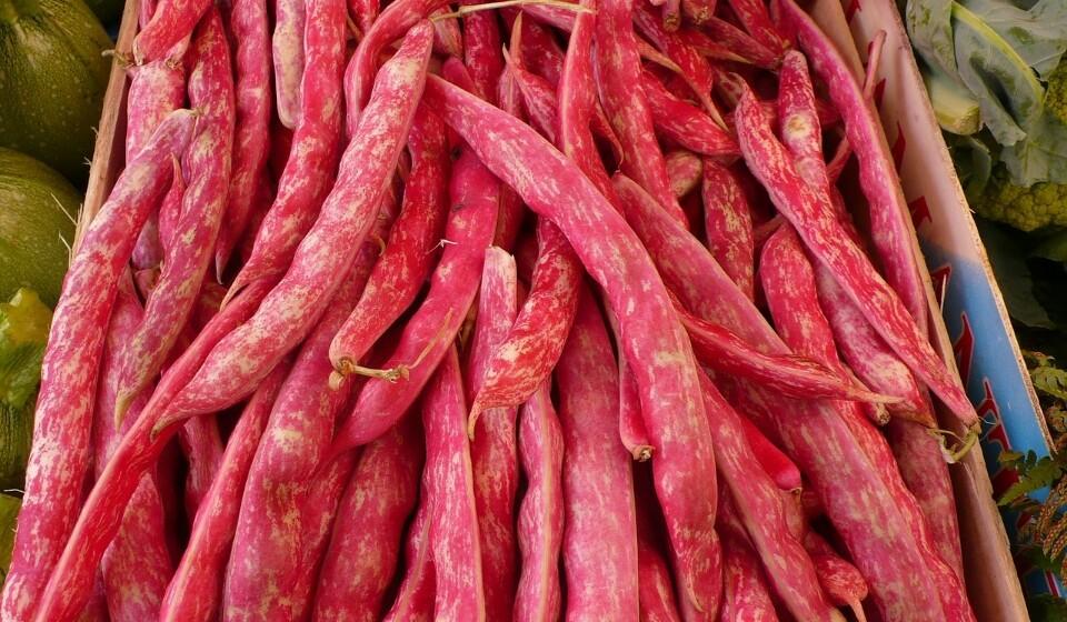 Feijão Vermelho - Este feijão quando cozido contém cerca de 22.8% de hidratos de carbono, especialmente na forma de amidos e fibras. O feijão é rico em vitaminas, antioxidantes, minerais e compostos vegetais. O feijão vermelho ajuda a controlar os níveis de açúcar no sangue e a reduzir o risco de cancro no cólon.