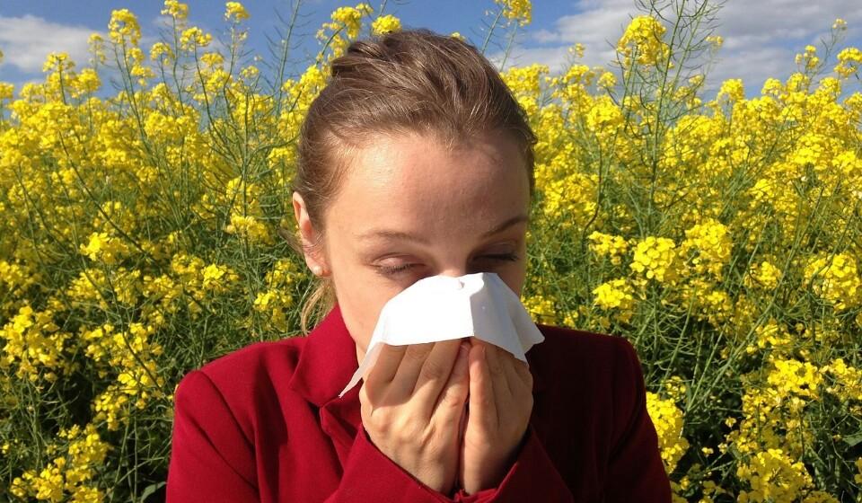 Ajuda a melhorar de alergias - A hortelã-pimenta contém ácido rosmarínico, um composto vegetal encontrado no alecrim e plantas da família das mentas. O ácido rosmarínico está associado à redução dos sintomas de reações alérgicas, como o corrimento nasal, olhos irritados ou problemas de asma.