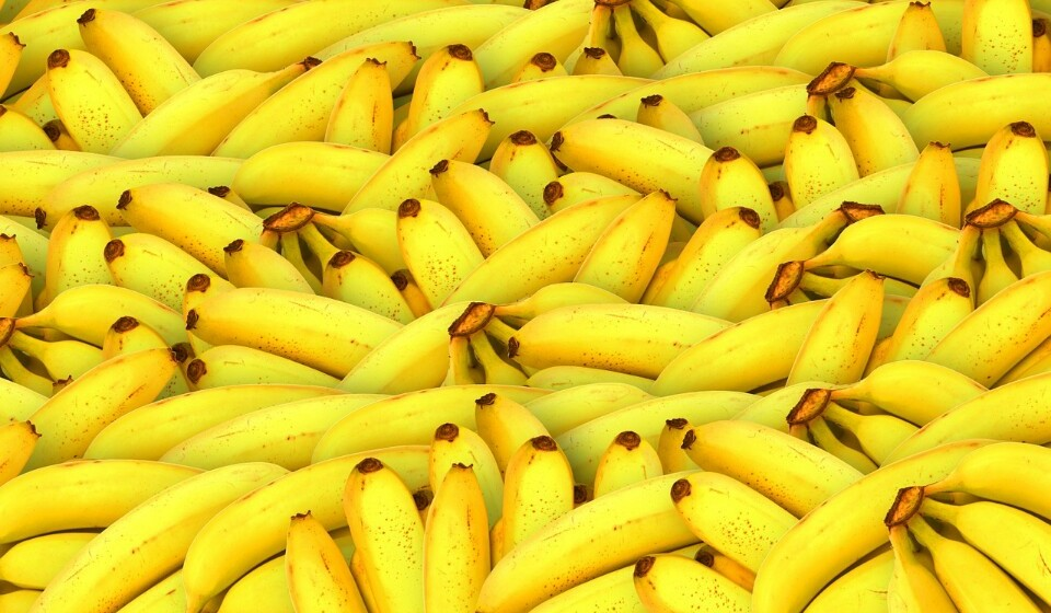 Bananas - Estas são uma boa fonte de nutrientes, pois são ricas em vitamina C, vitamina B6 e potássio. A banana verde contém um amido resistente que funciona como se fosse uma fibra. Uma banana de tamanho médio tem cerca de 3,1% de fibras.
