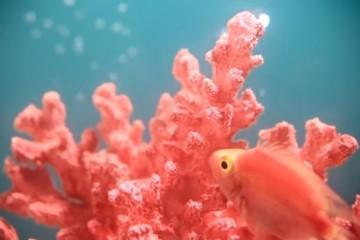 Living Coral. Esta é a cor de 2019, ilustrada por um peixe a nadar num coral, remetendo para a necessidade crescente que temos de experiências reais e imersivas, num mundo dominado pelas tecnologias e pelas redes sociais. Saiba mais sobre esta tonalidade e conheça ainda todas as cores do ano que têm refletido a evolução do mundo desde o ano 2000.