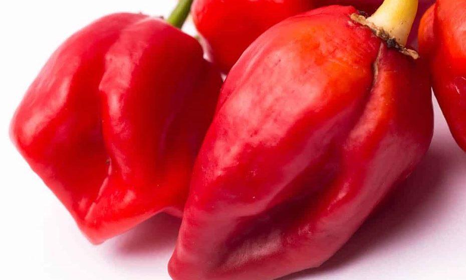 2 - Komodo Dragon Pepper: 1,400,000 a 2,200,000 SHU. Anunciada em 2015, foi colocada à venda nas lojas Tesco. A pimenta foi descrita como tendo uma reação retardada. No início parece uma maravilhosa fruta quente, mas depois de cerca de 10 segundos a força total da pimenta bate e toda a boca fica incandescente.