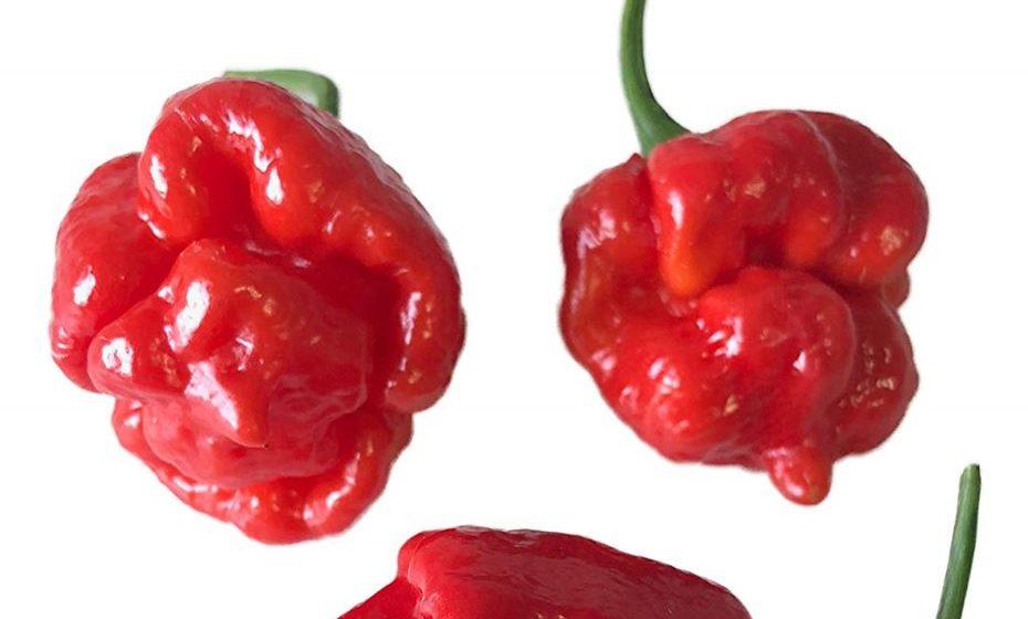 """7 - Trinidad Scorpion """"Butch T"""": 800,000 a 1,463,700 SHU. Esta é uma variedade da pimenta Trinidad Scorpion e, por 3 anos, deteve o título do Guinness Book como a pimenta mais picante do mundo."""