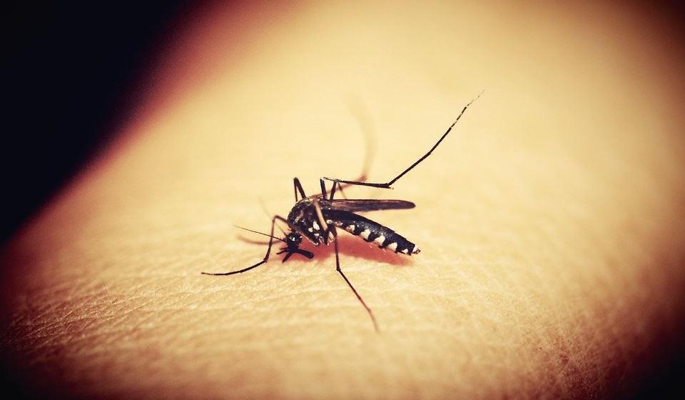 Dengue - Estima-se que 40% do mundo está em risco de dengue, e existem cerca de 390 milhões de infeções por ano. A estratégia de controlo da OMS para esta doença visa reduzir as mortes em 50% até 2020.