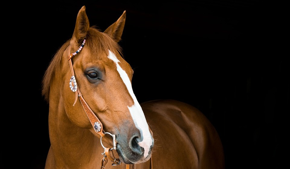 Cavalo (anos: 2012, 1990, 1978, 1966, 1954, 1942, 1930, 1918...)