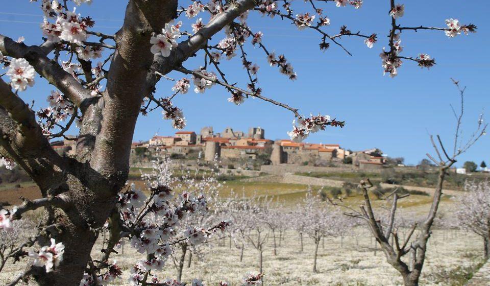 Amendoeiras em Castelo Rodrigo