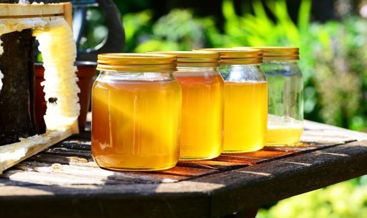 Colmel volta a destacar a importância da apicultura em Portugal