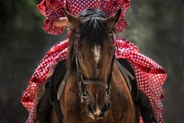 Fado, flamenco e cavalos: Tróia recebe festival equestre em abril