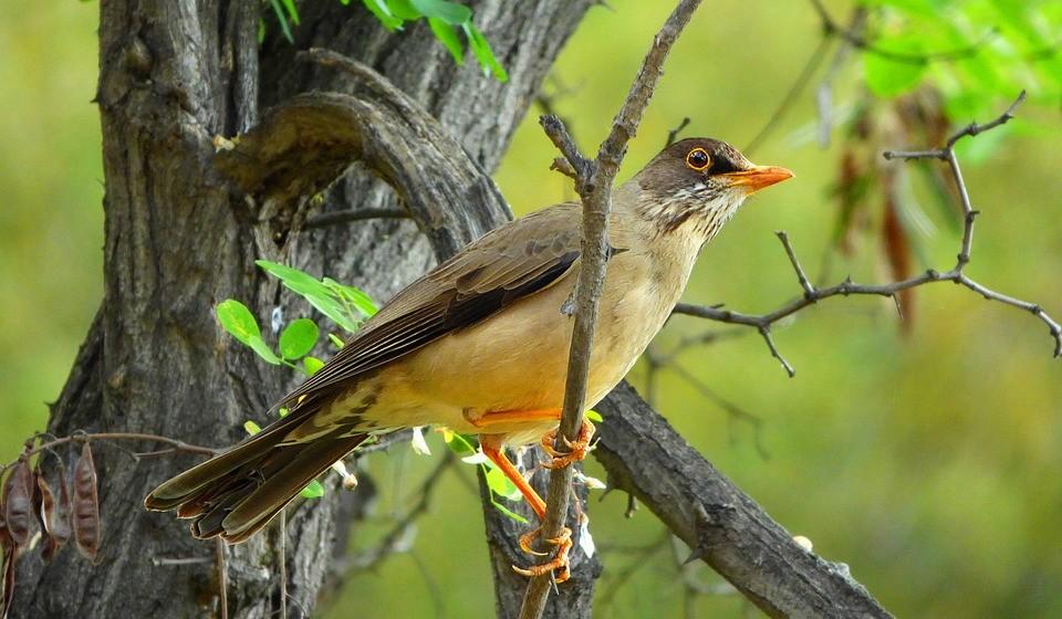40% das espécies de aves do mundo estão em declínio e uma em cada oito está ameaçado de extinção global.