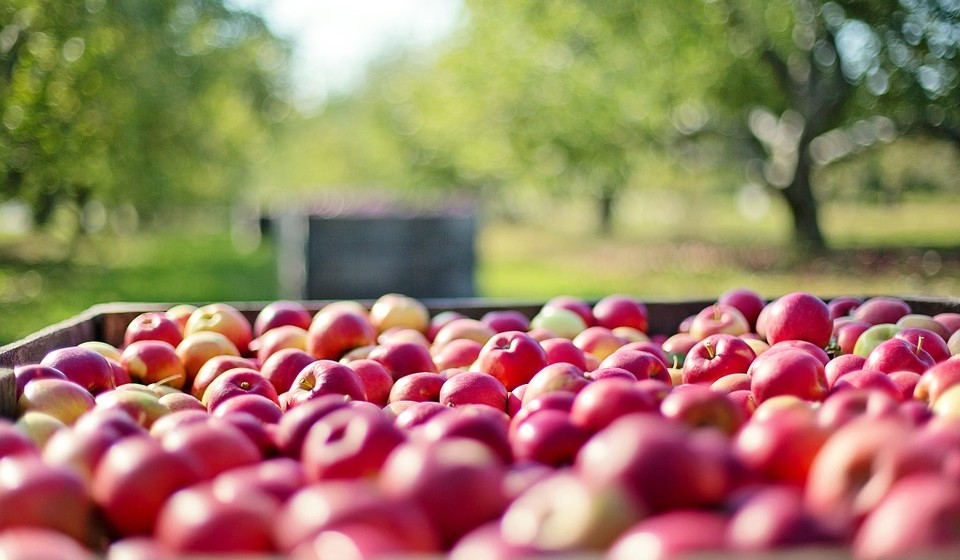 Consumir alimentos derivados de comércio justo.