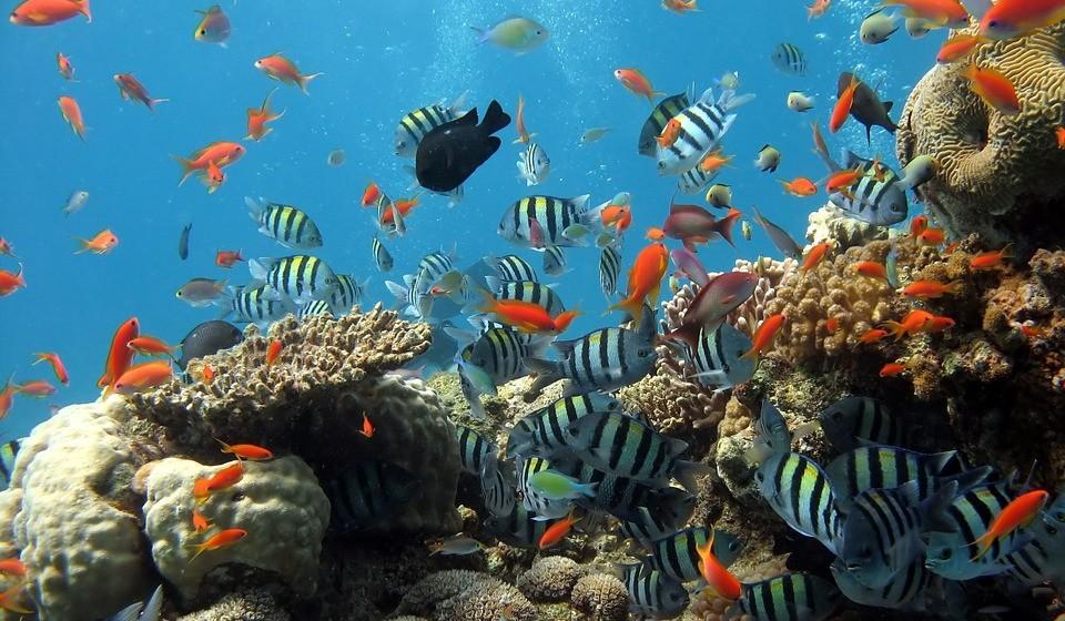 Cerca de um quarto dos recifes de coral do mundo já foram danificados, e 75 por cento dos recifes de coral do mundo estão em risco de tensões locais e globais.