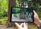 No Parque das Termas, uma sequóia com mais de cem anos fala sobre a história deste jardim.