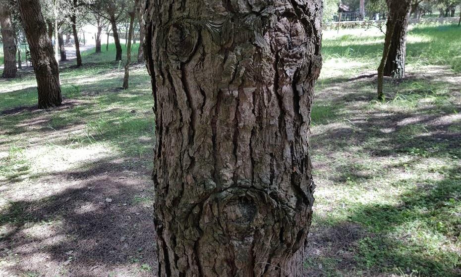 Descubra os vários humores das árvores do bosque.
