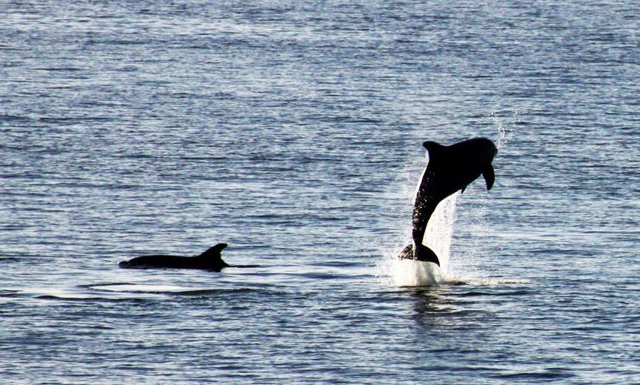 Golfinhos-roazes