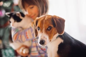 As terapias com animais são geralmente utilizadas para promover o bem-estar físico, social, emocional ou o funcionamento cognitivo de indivíduos ou grupos. A instrutora de cães de assistência, Daiana Ferreira, resume de seguida o conceito.
