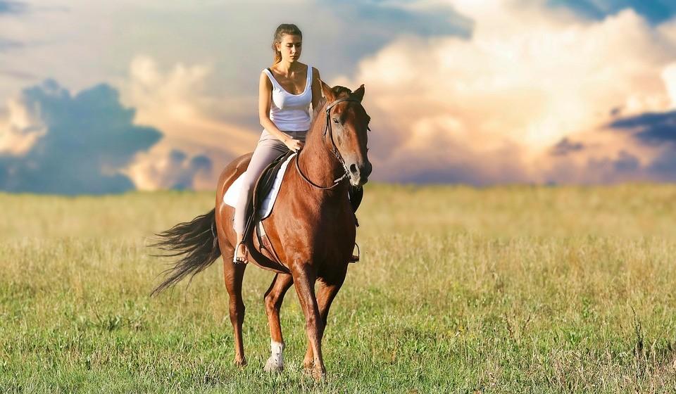 O funcionamento destas terapias varia consoante as características do participante e também do animal.