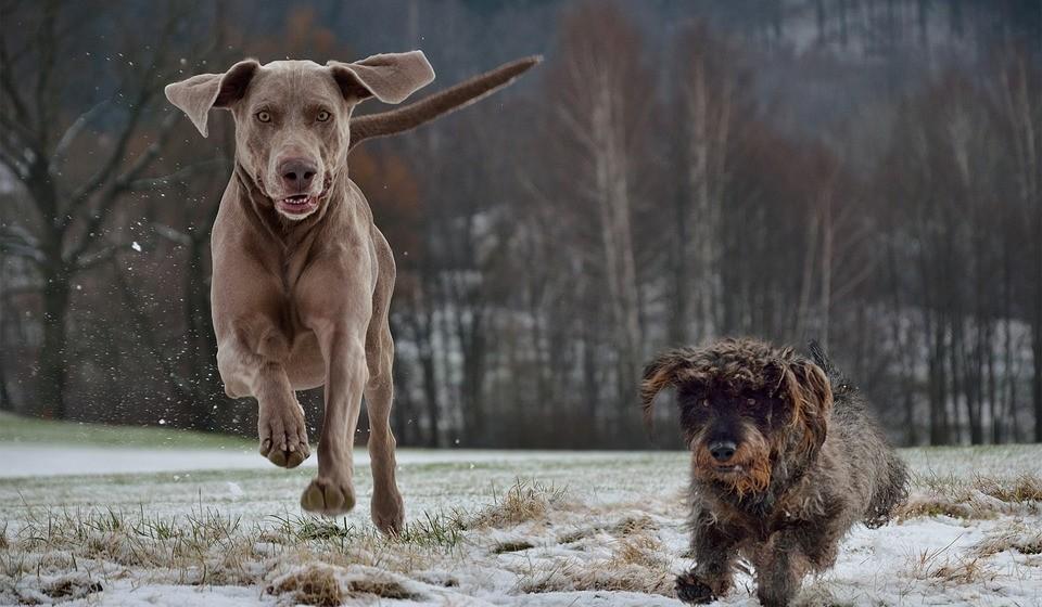 Os animais, e especialmente quando nos referimos aos cães de terapia, detêm um nível muito elevado de adaptabilidade, seja às condições físicas dos locais de trabalho, às características específicas do coletivo com o qual trabalha ou ao indivíduo em particular, até à própria evolução no processo terapêutico.