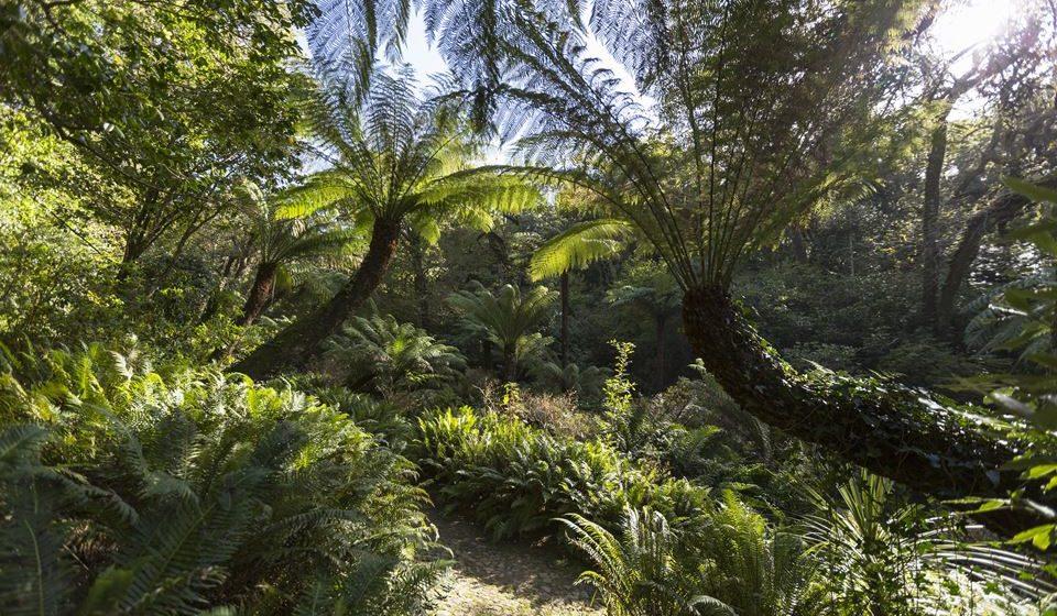 Parque da Pena -Feteira da Rainha- ©PSML-EMIGUS