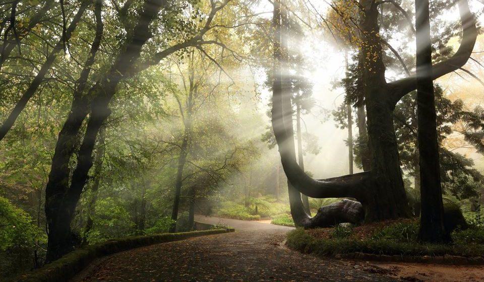 Parque da Pena -Tuia gigante - ©PSML-EMIGUS