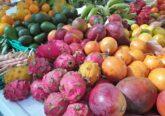 Fruta exótica no Mercado dos Lavradores