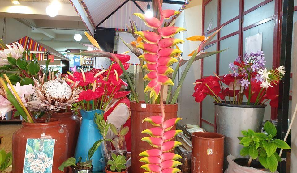Flores exóticas no Mercado dos Lavradores