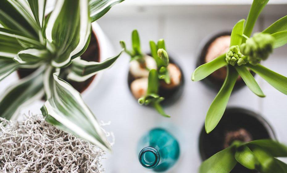 Utilizar humidificadores ou ter mais plantas em casa ajuda a evitar que a sua pele fique tão seca.