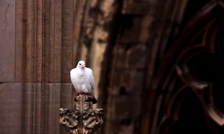 Pomba: É o símbolo universal da paz. A pomba branca é considerada o pássaro mensageiro de paz no cristianismo e no judaísmo.