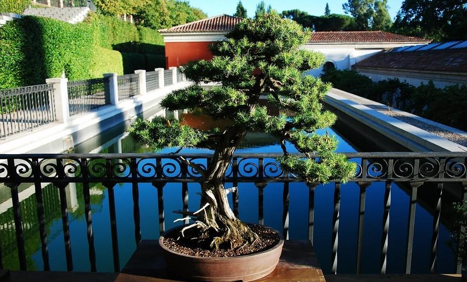 As pequenas árvores oferecem um desafio maior do que a maioria das plantas do seu jardim mas, com estas dicas, o seu bonsai vai crescer saudável