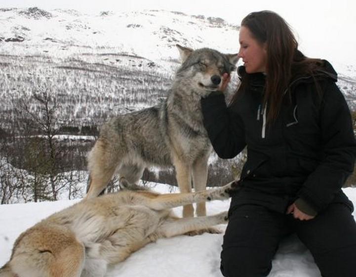 O Polar Park, localizado na Noruega, alberga lobos em cativeiro. Este ano, pela primeira vez, organiza encontros chamados de Wolf Visit (Visita aos Lobos). Aqui, os participantes podem usufruir de uma experiência única, interagindo com estes animais que, desde sempre, intrigaram os humanos e estão na base de tantos mitos.
