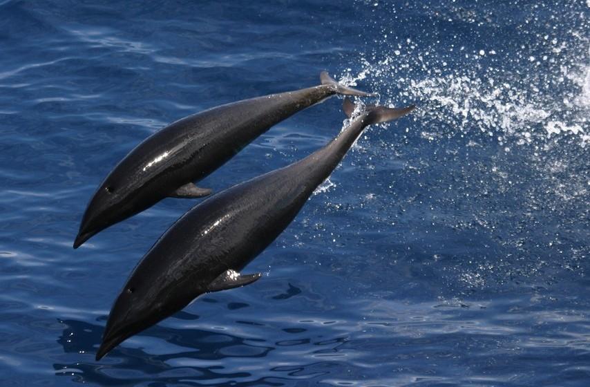 Golfinho: Sonhar com um ataque de golfinho é sinal de que alguma coisa má vai acontecer, já se estão a brincar, significa que a sua vida está no caminho certo e pode relaxar.