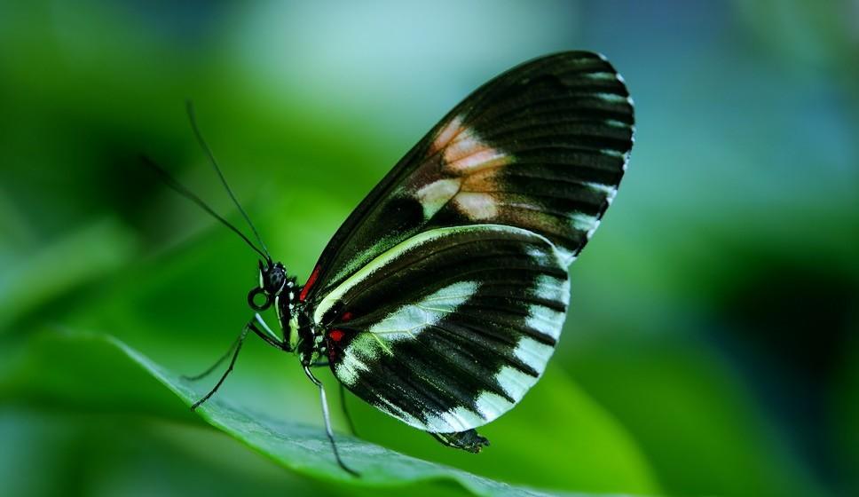 Borboleta: Borboletas a voar entre flores e relva verde significa prosperidade e riqueza. Se sonhar com muitas borboletas poderá vir a receber notícias de um amigo, já se for mulher e tiver o mesmo sonho, pode significar que vai ser pedida em casamento em breve.