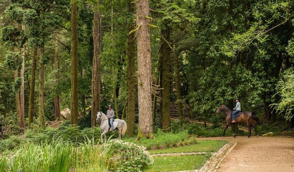 Andar a cavalo pela Sintra mística. Todos os dias há passeios a cavalo pelos trilhos e caminhos do Parque da Pena. A duração dos passeios pode variar entre os 30 e os 90 minutos, ou as 3h e as 6h. No programa mais longo existe a possibilidade de visitar outros polos sob gestão da Parques de Sintra e mesmo agendar um almoço em local a especificar. Todos os passeios são feitos mediante acompanhamento dos tratadores dos cavalos, que guia os visitantes através do percurso. Passeios a cavalo: 10€/30 min, 25€/90 min, 50€/3h, 100€/6h (acresce o bilhete de entrada no Parque da Pena).