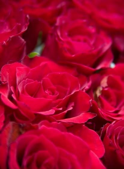 Aproveite o verão para secar algumas flores que pode utilizar para decoração durante o inverno.