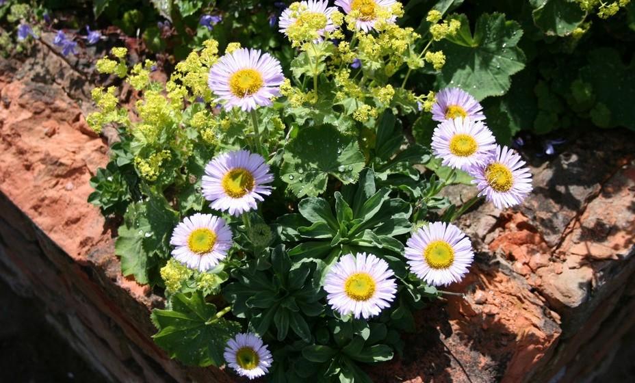 Caso tenha um pequeno jardim, então opte por plantar algumas flores, que vão durar mais tempo e crescer.
