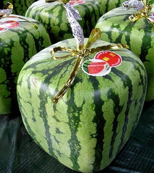 As coloridas melancias parecem ser um fenómeno da Ásia. Antes do pão, já o Japão tinha sido invadido pelo fenómenos das melancias quadradas, vendidas a cerca de 90 euros a unidade.