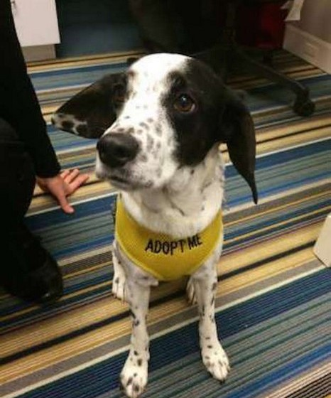 """Alguns dos cachorros têm um colete com a palavra """"Adopt me"""" (adote-me)."""