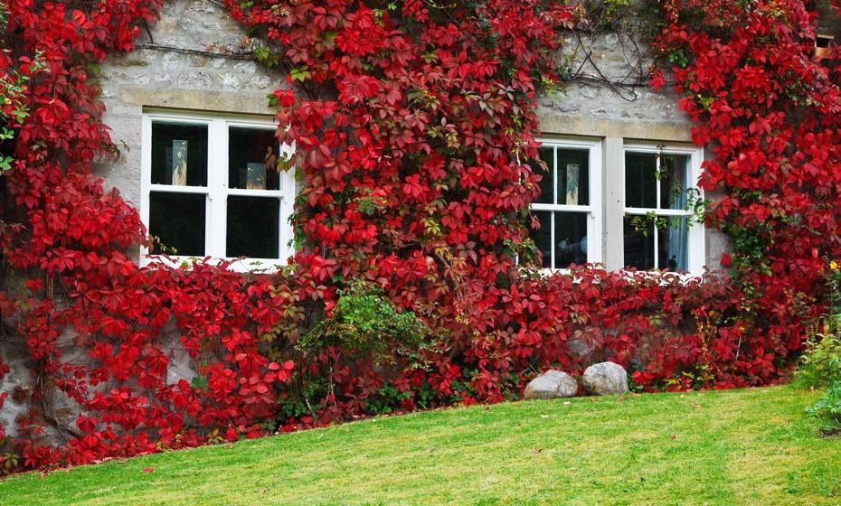 Se é realmente apaixonada por flores, já pensou em deixar uma trepadeira crescer pela fachada da sua casa? É uma solução interessante para uma temática romântica.