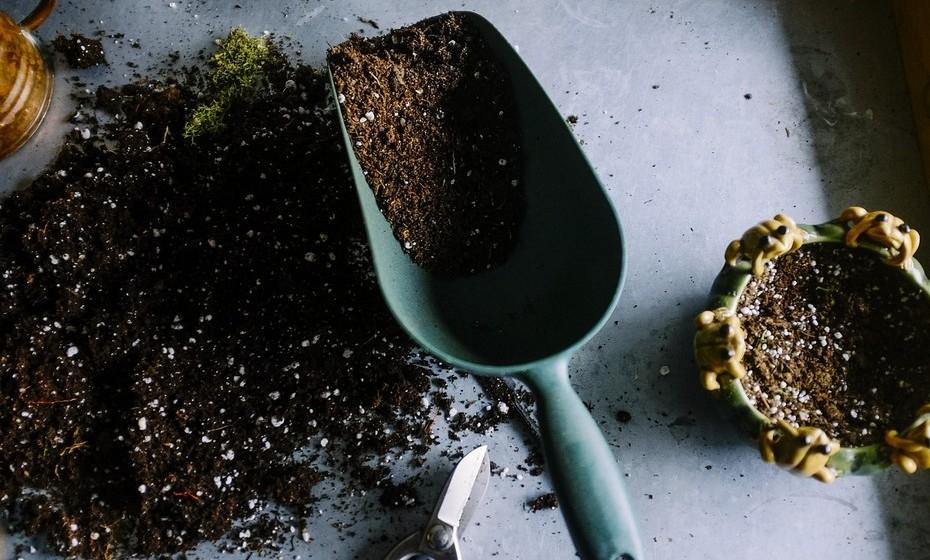 Adubo: Os nutrientes são essenciais para o crescimento das plantas e os poucos que se encontram no vaso normalmente não são suficientes. Como tal, procure um adubo granulado, em pó ou líquido; orgânico ou mineral; e com diversas fórmulas para testar qual funciona melhor. Como dica, comece por experimentar um adubo orgânico em pó e vá adicionando gradualmente outros tipos, uma vez que os orgânicos são mais suaves.