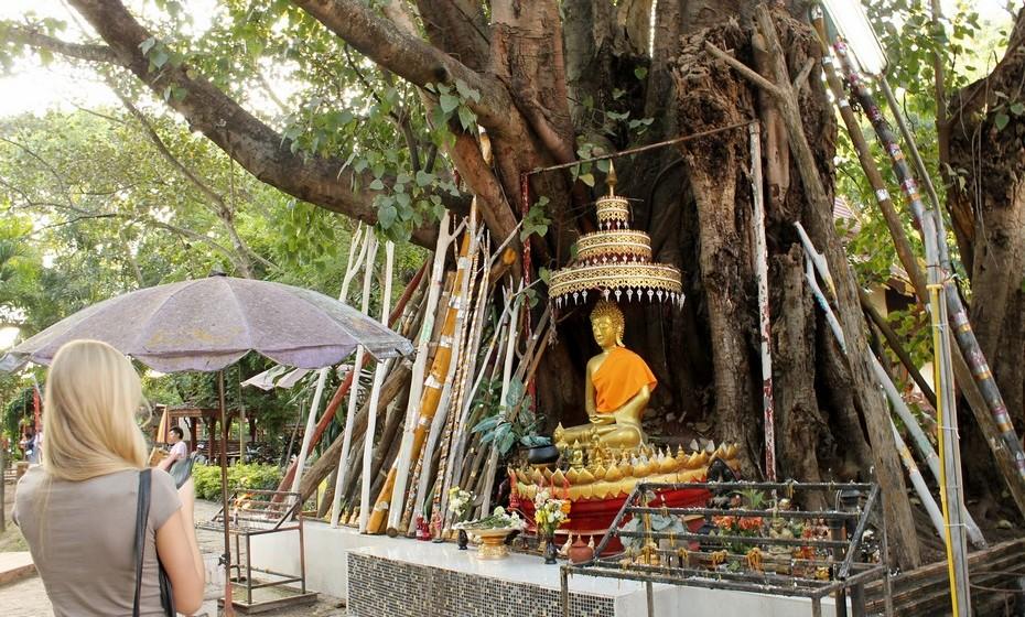 Chiang Mai é a segunda maior cidade tailandesa e a capital cultural. Chiang Mai tem mais de 300 templos budistas e várias universidades, responsáveis pelo desenvolvimento da cidade.