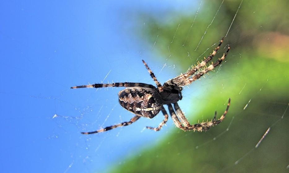 Aranha: Se vê uma tarântula no seu sonho, vai enfrentar conflitos no trabalho. O sonho em que a aranha a ataca é um aviso contra inimigos. Já o sonho em que mata uma aranha, significa que vai vencer inimigos ou desafios.