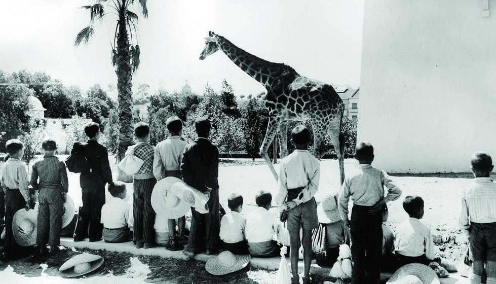As primeiras instalações situaram-se no Parque de São Sebastião da Pedreira, que foi cedido gratuitamente pelos seus proprietários. Mais tarde, o parque mudou-se para a Palhavã, e a 28 de maio de 1905 foram inauguradas as novas e definitivas instalações na Quinta das Laranjeiras.