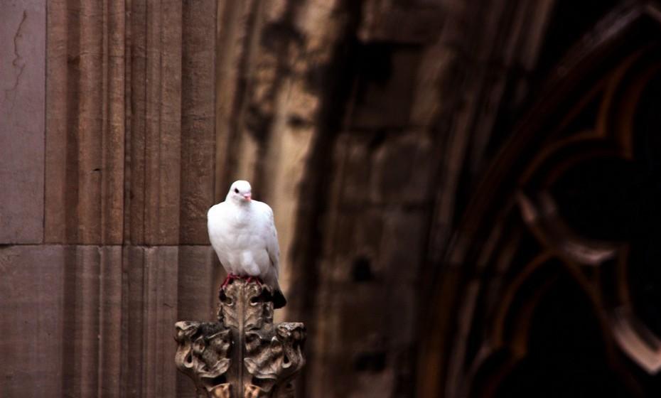 Imagem de pomba: Por ser o símbolo da paz, traz tranquilidade a quem a carrega ou à casa onde está.