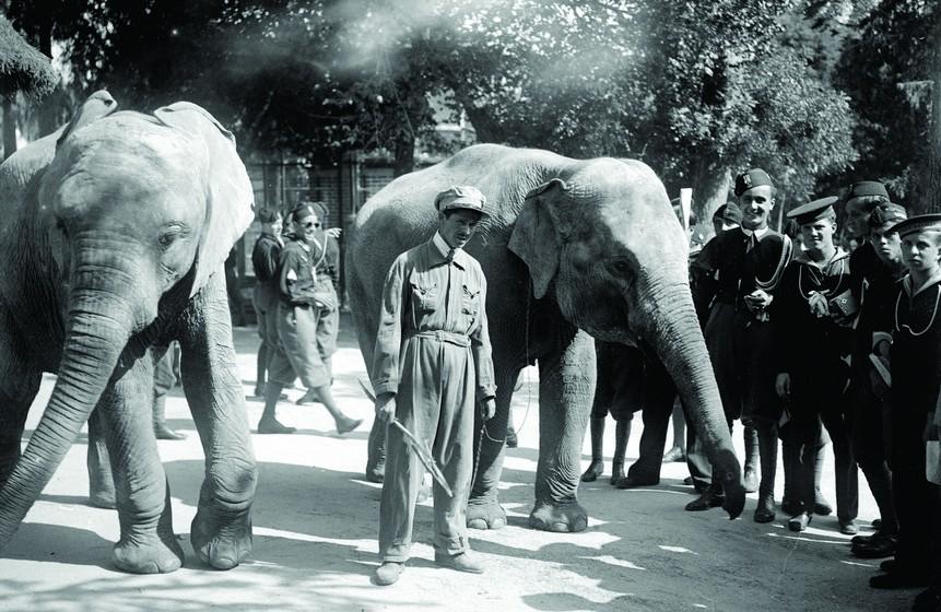 As inúmeras remessas de animais vindos de África e do Brasil contribuíram para que, ao longo dos anos, o Jardim Zoológico tivesse uma das coleções de animais mais vastas e diversificadas do mundo.