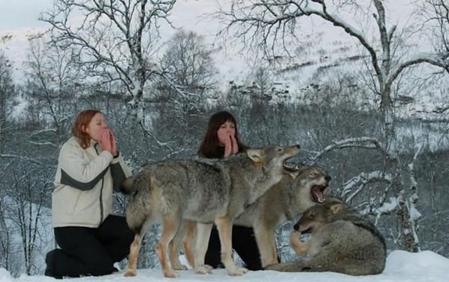Apesar do parque estar aberto todo o ano, é no inverno que a magia maior acontece, com os campos cobertos de nove e os lobos mais ativos, devido à lua. Nesta altura, é ainda possível marcar uma Howl Night (Noite do Uivo) para grupos de mais de dez pessoas. Neste programa, que acontece durante a noite, os visitantes estão com os lobos durante os momentos em que este uivam e podem mesmo juntar-se a eles, ou apenas observar este magnífico momento.