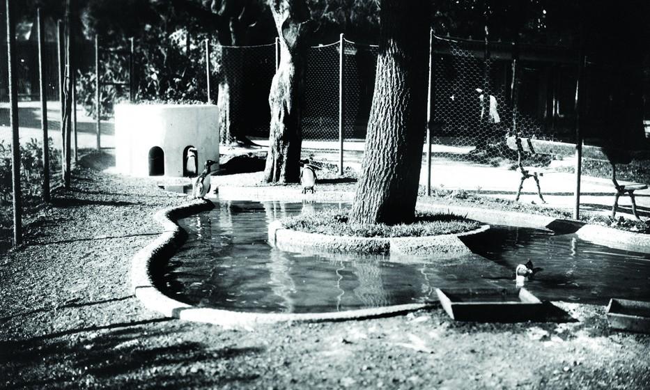 No dia 12 de março de 1913, o Jardim Zoológico foi declarado Instituição de Utilidade Pública. Na imagem, espaço dos pinguins.