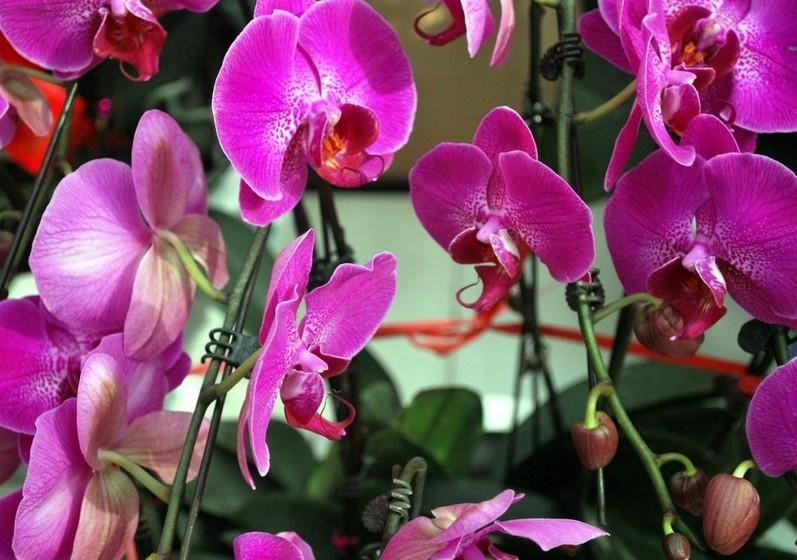 Orquídea – Uma das mais belas flores da natureza é delicada, altiva e requintada. Tem uma longa duração e são o presente ideal se quiser oferecer requinte.