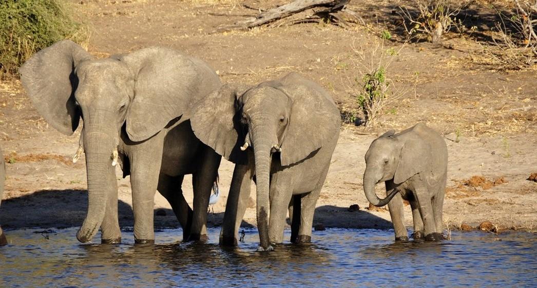 Imagem de elefante: Além de proteger a casa, impede que energias negativas se instalem na família. O elefante deve ser colocado de costas para a porta de entrada da casa, evitando que olhares invejosos possam entrar por ela. É também usado para atrair riqueza, devendo para isso colocar um pequeno elefante no porta-moedas.