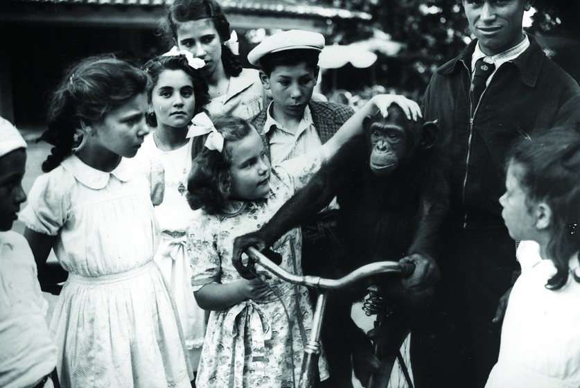 No dia 28 de maio, o Jardim Zoológico de Lisboa celebra 130 anos. Inaugurado em 1884, foi o primeiro parque com fauna e flora da Península Ibérica. Regresse connosco ao passado e veja como era antigamente o Jardim Zoológico… e descubra as diferenças.