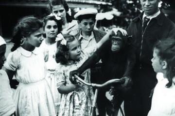 Regresse connosco ao passado e veja como era o Zoo nos seus primeiros anos de vida